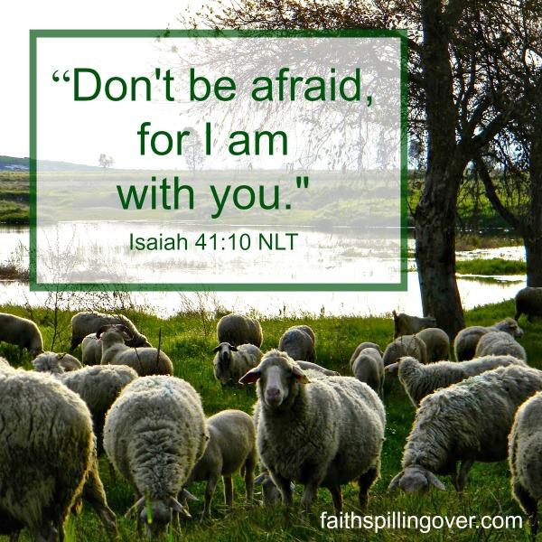 FMF Fear Don't Be Afraid