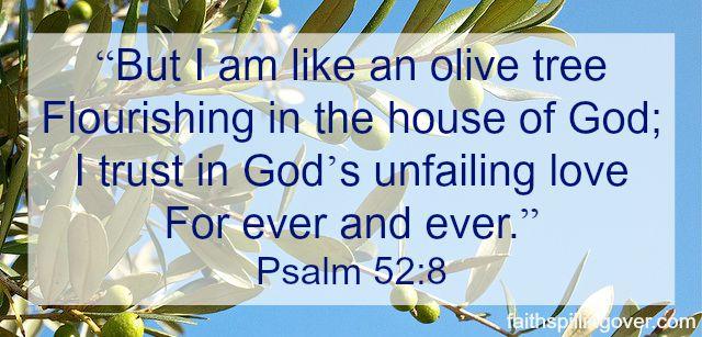 Olive Tree Scripture